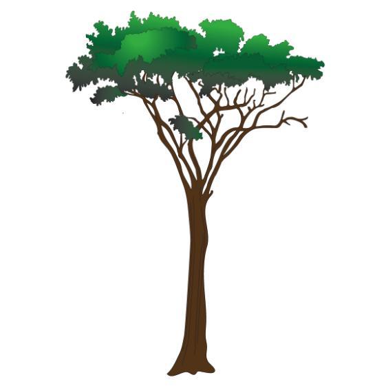 Clinton Acacia Tree Wall Sticker