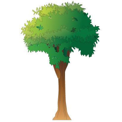 Clinton Tree Wall Sticker
